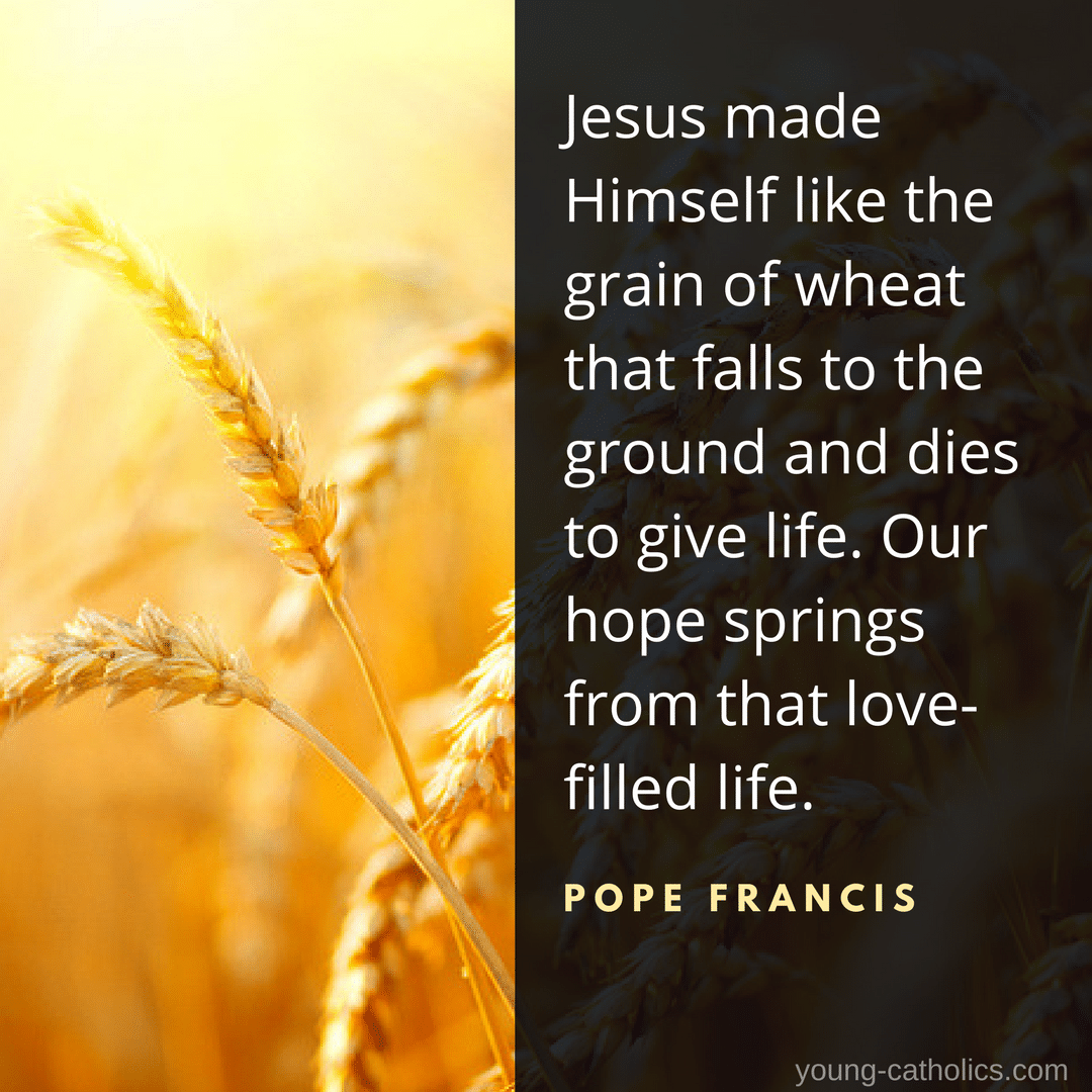 Jesus made Himself like the grain of wheat that falls to the ground and dies to give life. Our hope springs from that love-filled life. - Pope Francis